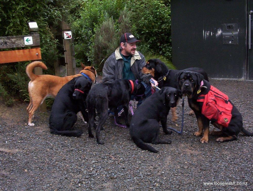 Newlands Dog Walker at Ngaio, Wellington