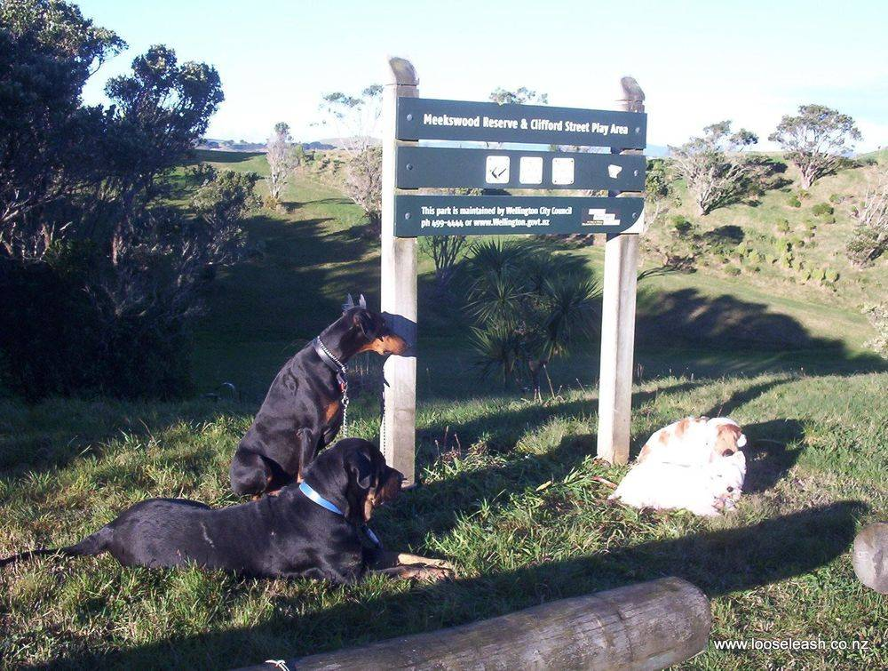 Dog Walking outing to Meekwoods Reserve Dog Park Off Leash Exercise Area Woof Woof Ruff. Well exercised happy wee group! Shiny coats & happy eyes!