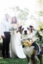 St. Louis, MO Elopement Wedding