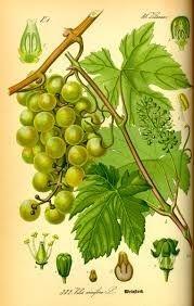 Grape seed oil ingredients
