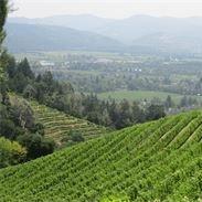 See views like this at Napa Sonoma Wine Tasting Driver.