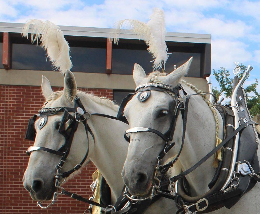 Misty Lane Performance Horses
