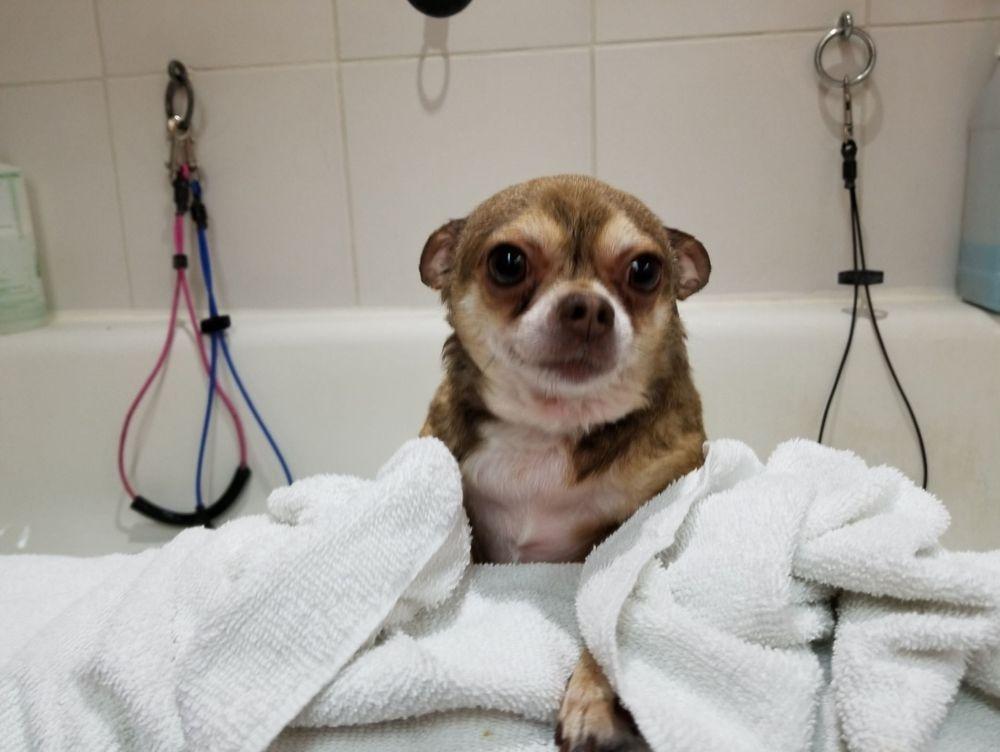 Terrier X Petstyles Plus,Certified Dog Groomer