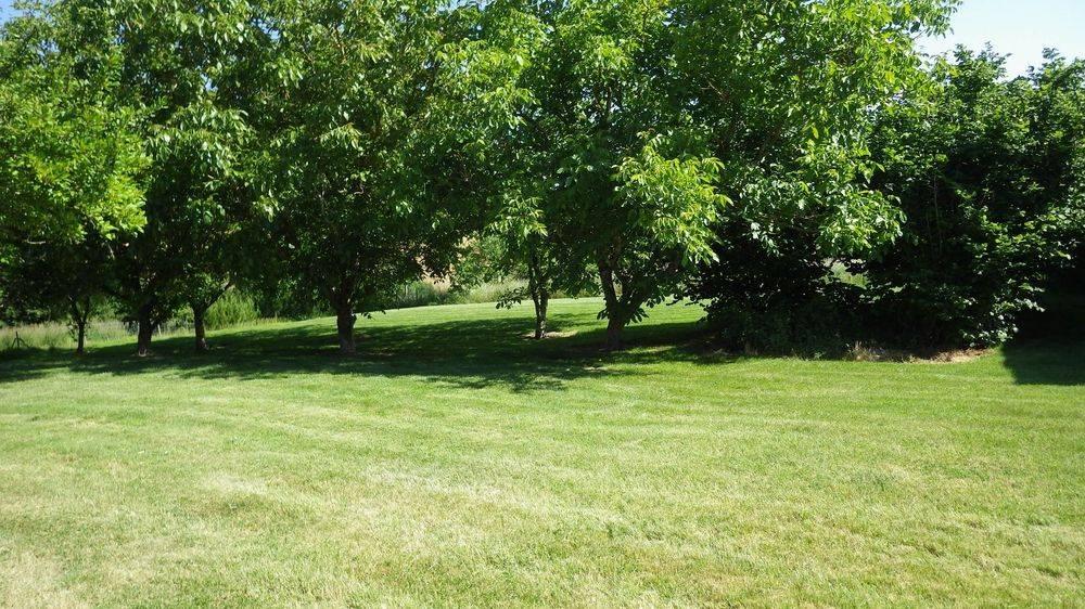 Beautiful Walnut orchard