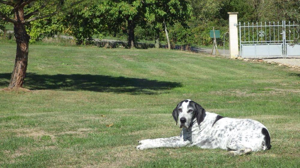 Hugo relaxing at Gabillou