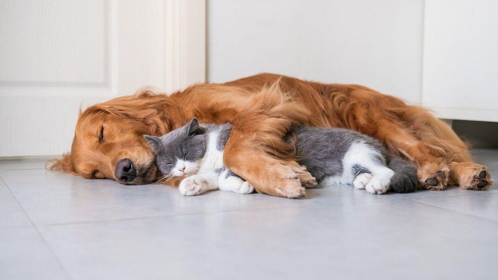 Hund beschützt Katzenkumpel
