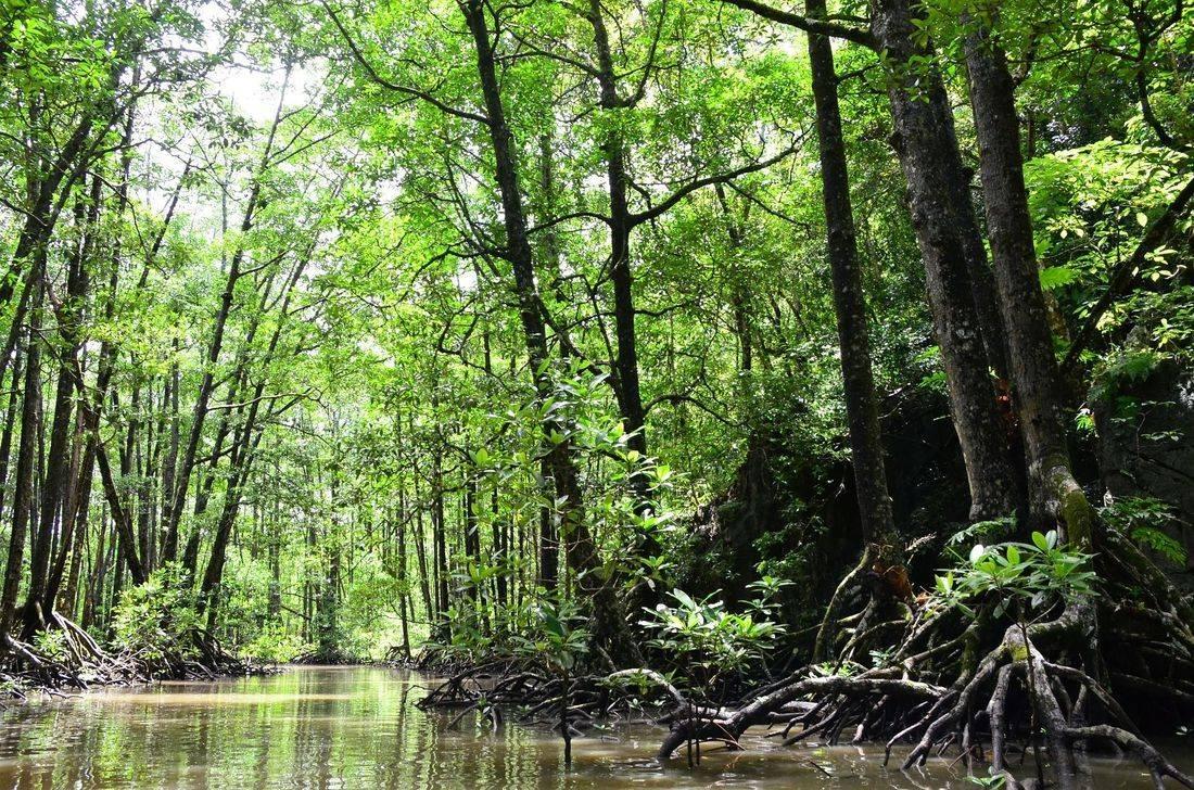 PALAWAN water river mangrove philippines