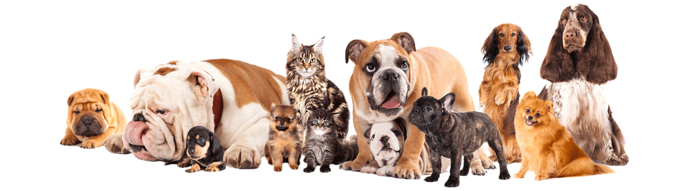 pet care, vet, reiki, animal reiki, reiki practitioner, wellness