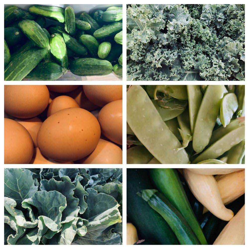 A collage of cucumbers, kale, eggs, snow peas, greens and squash.