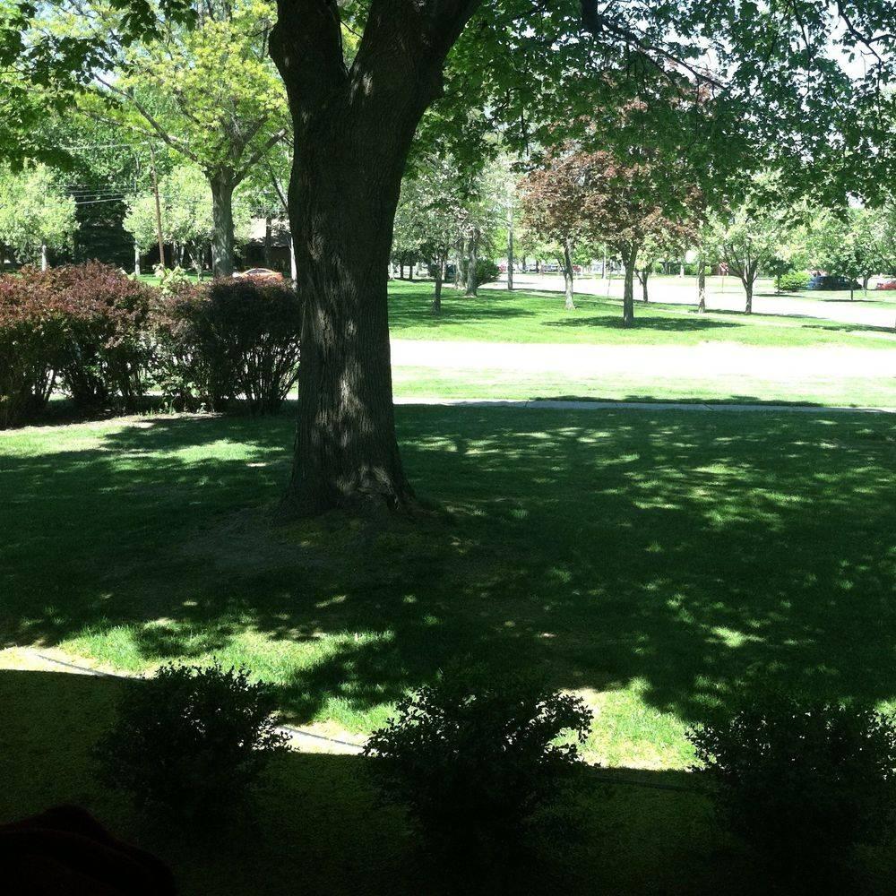 A lawn