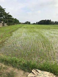 farm lot in barangay soledad , santa rosa, nueva ecija