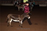 2013 Ozark Empire Fair