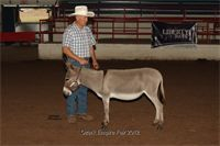 2012 Ozark Empire Fair