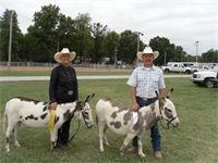 2011 Ozark Mule and Donkey Days