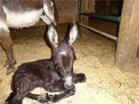 DRF Midnight Express DOB: June 2015 Black w/Star - Jack (now a gelding)