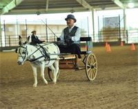 """M&M Delights Angels Patches DOB: July 16, 2009 34"""" gray and white spot Sire: Sandhills Geronimo Dam: BW's Angel"""