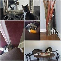cat sitting, cats, pets, pet sitting, pet care