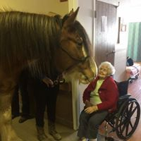 Clydesdale and woman in wheel chair