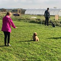 national dog training centre, puppy classes