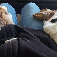 dogs, dog sitting, pets, pet sitting, pet care