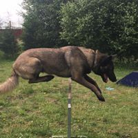 agility@nationaldogtrainingcentre