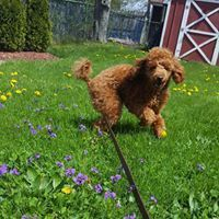puppy, dog walking, dog sitting, dogs, pets, pet siting, pet care