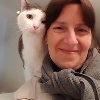 cat sitting, pet sitting, pet care, pets, cats
