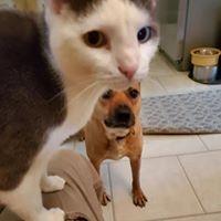 cat sitting, cats, pets, pet sitting, pet care, dogs