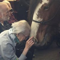 Clydesdale horse and senior