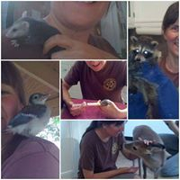 wildlife, wildlife rehab, volunteer, nature, birds, squirrels, deer, sandy bock