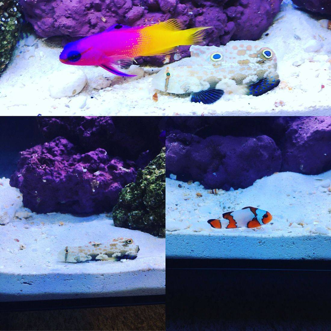 saltwater, clownfish, live rock