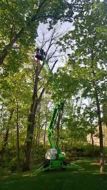 Tree Trimming in Des Moines