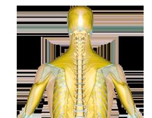 Hoffman Chiropractic