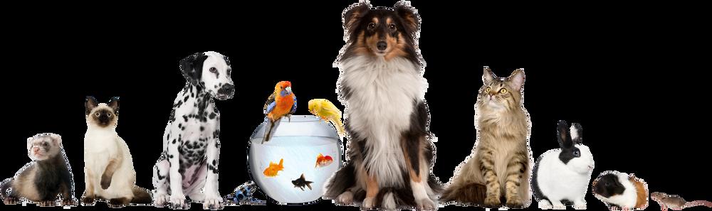 animal reiki, reiki, pets, care, vet, alternative care, wellness
