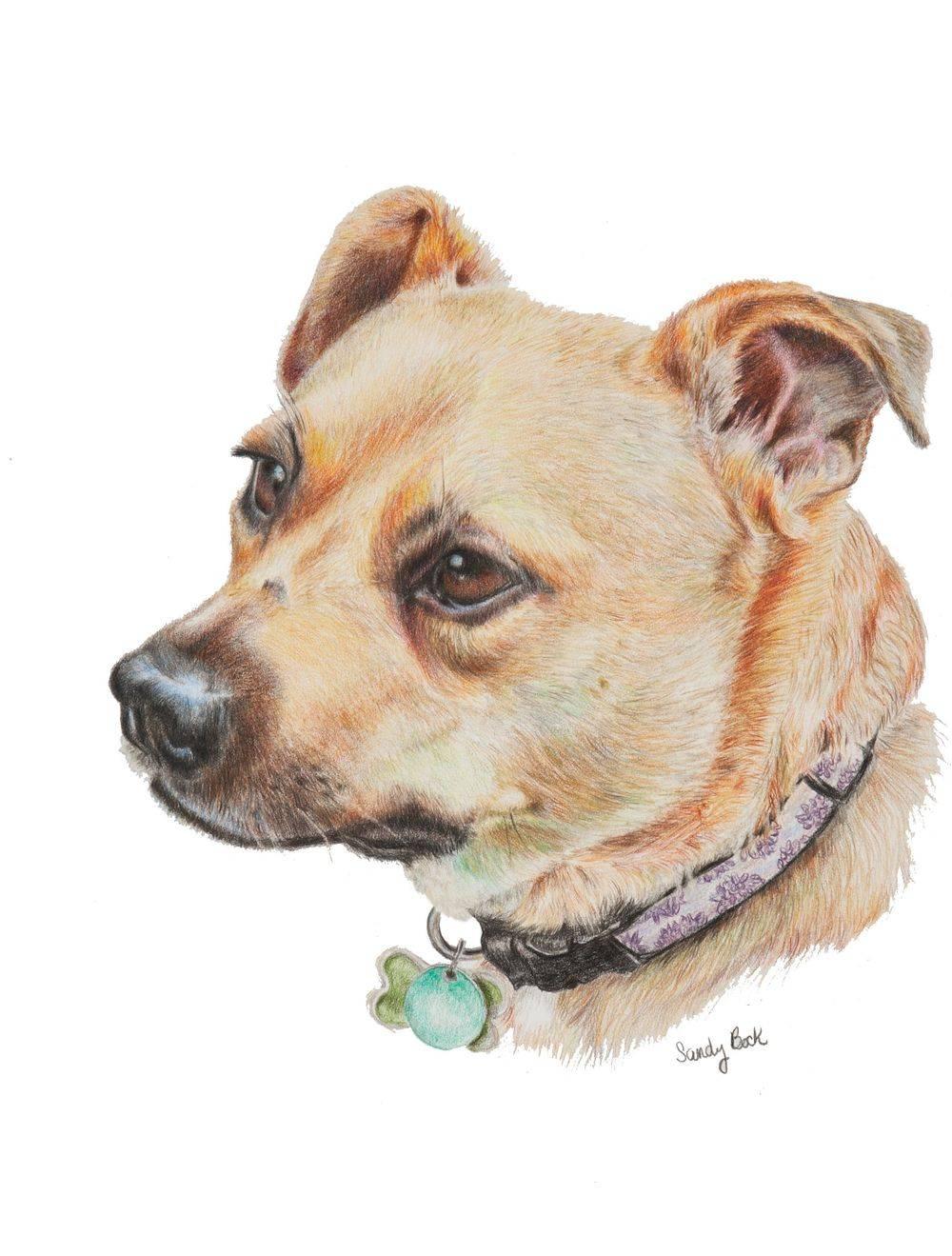 sandy bock, pet portrait, dog portrait, portrait artist, portrait art, custom portrait painting