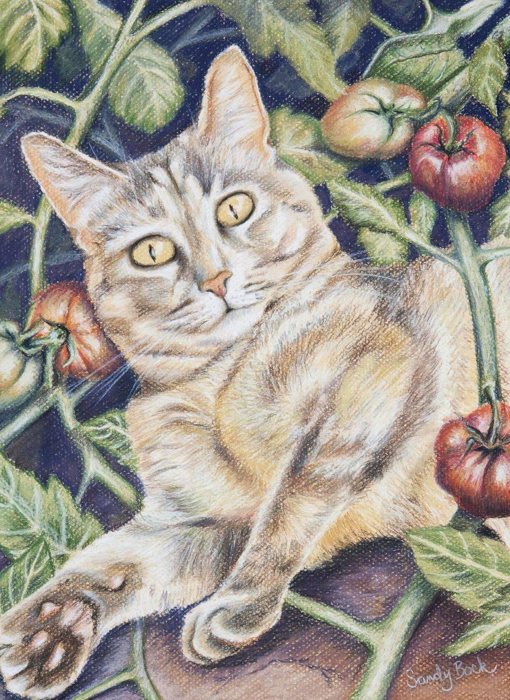 sandy bock, cat, cat illustration, garden art, pastel art, tomato garden, tomatoes, portrait illustration