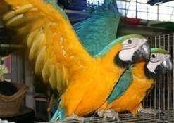 reiki healing parrots sick injured disease