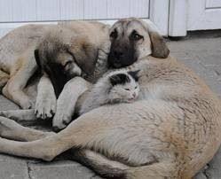 hund und katzt straße