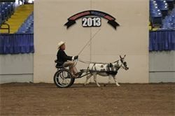 2013 Missouri State Fair