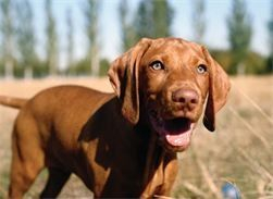 Dog and Puppy Training on a One to One basis in your own home