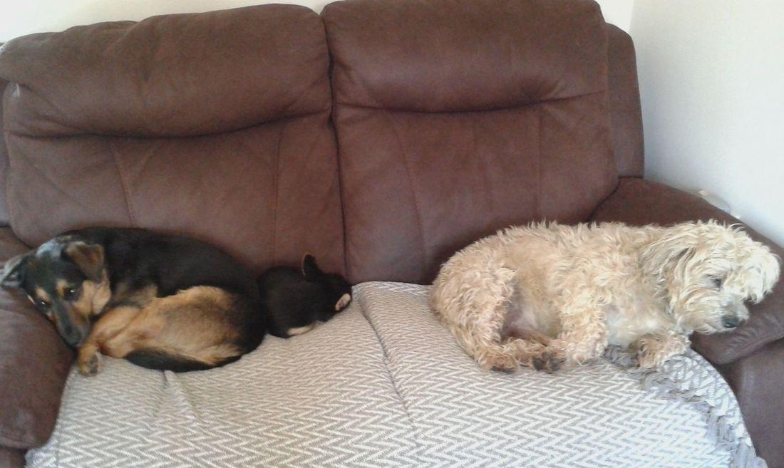 Cute dogs sleeping on the sofa