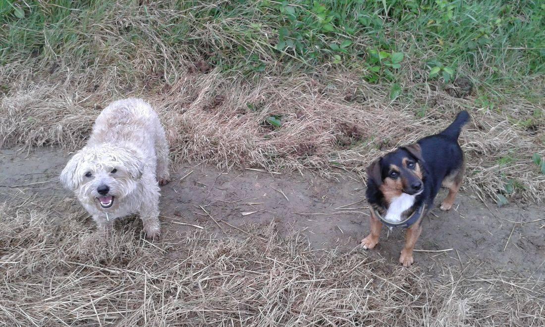 Cute dogs in a field