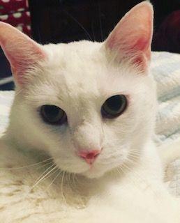 Cat Sitter Waltham MA