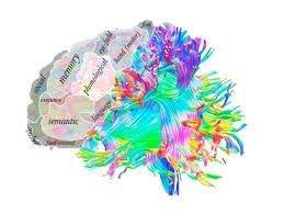 Neurobehavourial Model