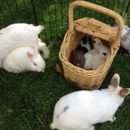 basket full of bunnies