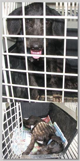 hundehilfe thailand kastr. hündin -lilly-