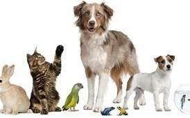 reiki pet healing all breeds