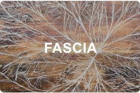 fascia which is worked on during myofascial release therapy