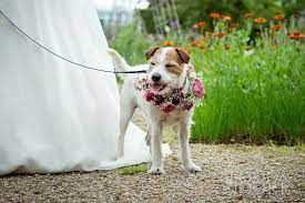 Off the peg wedding dresses York