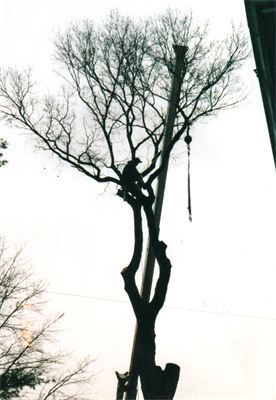 Crownsville, Annapolis, Davidsonville area tree removal and pruning